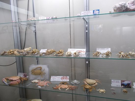 Sea Museum: Crabs in their dried forms