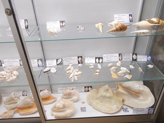 Sea Museum: Some bigger shells on display