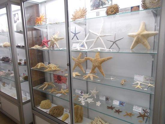 Sea Museum: Some starfish on display