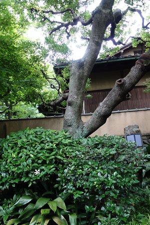 記念館に入ってすぐ、横山先生は自然のままの庭木がお好きだったそうです