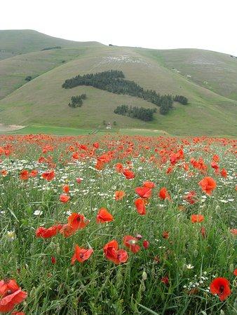 Castelluccio di Norcia, Italija: La fioritura
