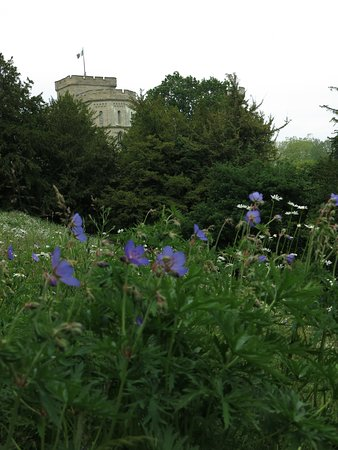 Eastnor Castle: wild flowers...