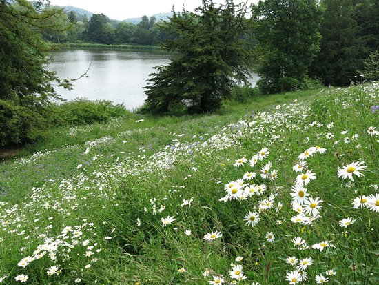 Eastnor Castle: meadow like view to the lake...