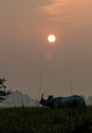 Rhino in sunset in Pobitora