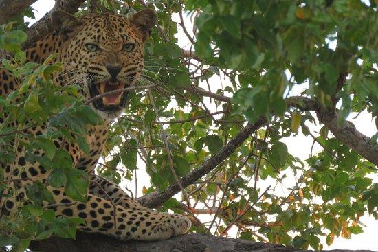 Live Life African Safari Getaways