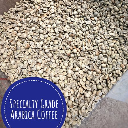 Unroasted green coffee.  Specialty grade coffees are very well-sorted and highest quality.
