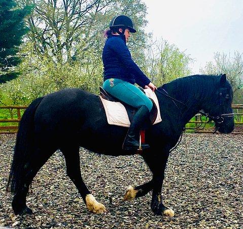 Unicorn Equestrian