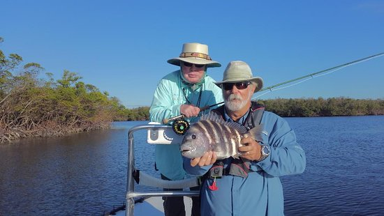 Everglades National Park, FL: Sheepshead