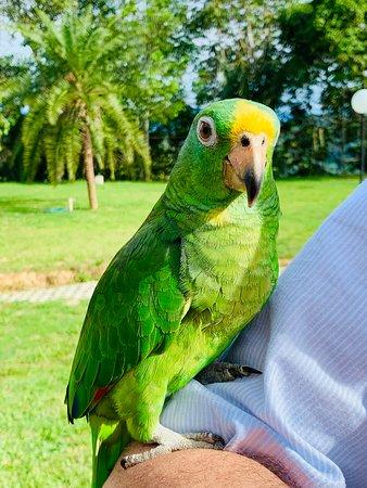 Hotel Mirador de la Esperanza: local birds