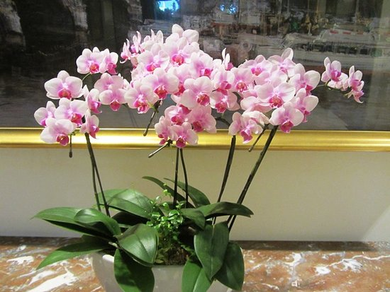 Hotel New Grand: Beautiful orchids growing in the hotel