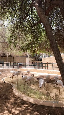 Emirates Park Zoo (Abu Dhabi) - 2019 All You Need to Know BEFORE You