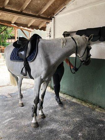 Alkuzu Binicilik Okulu atları