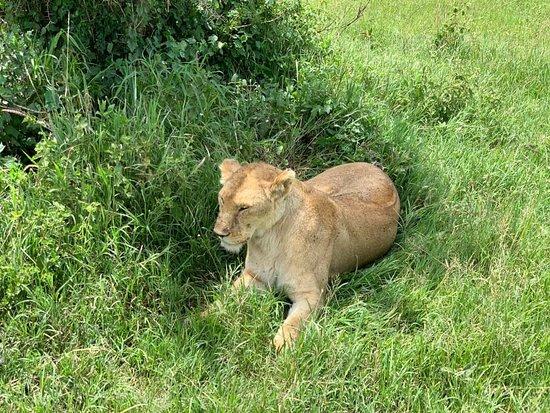 Losirwa Safaris (T) Ltd.