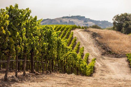 Herzegovina Wine Boutiques