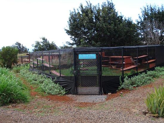 拉奈動物救援中心照片