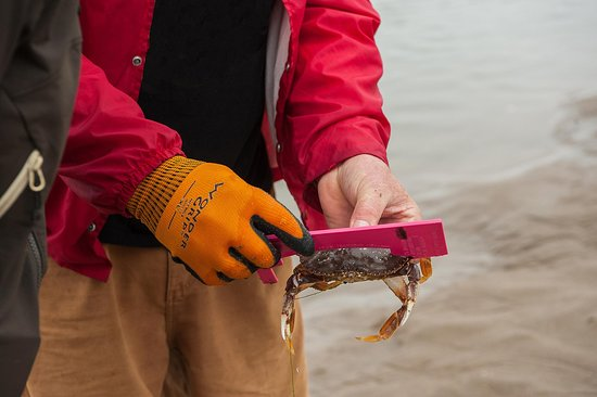 Catch crab in Siletz Bay in Lincoln City, OR