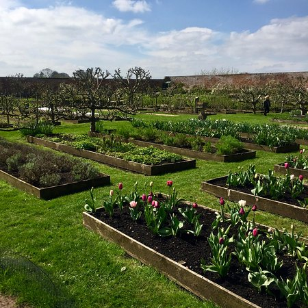 Babington House: The Walled garden with Tulips 💐 galore at the time