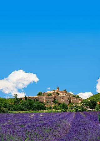 Francja: Dive into a sea of fragrant lavender when visiting the legendary summer fields of Provence.