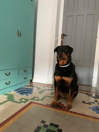 Ideal para escapada con perros