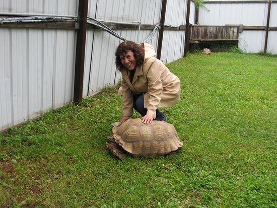 Critchlow Alligator Sanctuary: Nice tortoise.