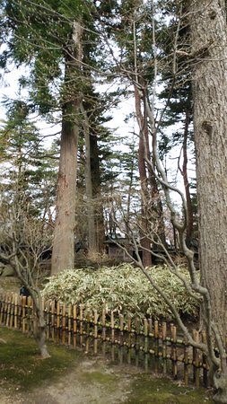 庭内の巨木と黒笹です