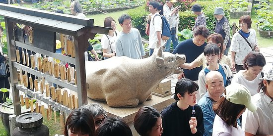 Mimuroto-ji Temple Komausagi