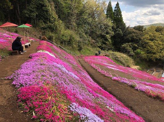 Shibazakura Garden of Adachi Family