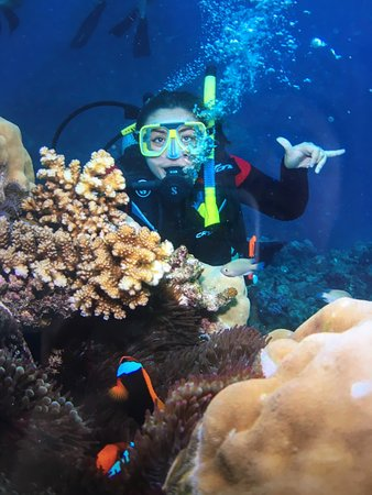 Valokuva: Great Barrier Reef Eco Snorkel and Dive Cruise from Cairns - Including Lunch