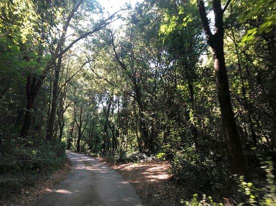 Boschi di Montecalvi: Ein Bild aus dem Weg, der Hoch zur Anlage führt.