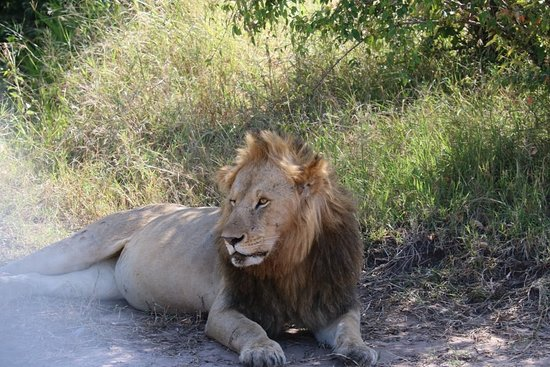 Национальный парк Масаи-Мара, Кения: Masai Mara the center of wildlife attraction in East Africa.. Masai Mara Kenya