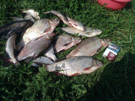 Povorino, Rosja: Удачная рыбалка