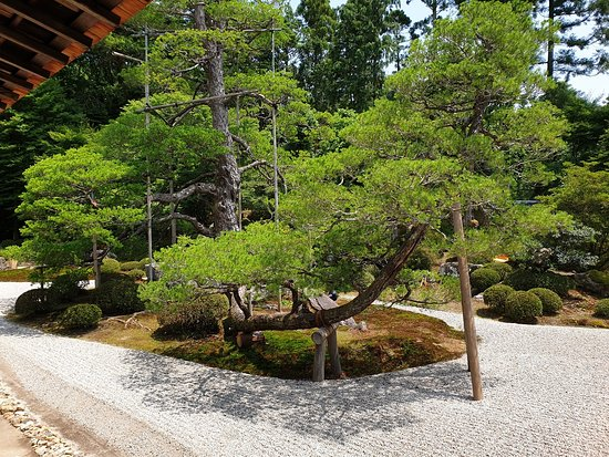 The Main Garden; a very well-shaped pine tree