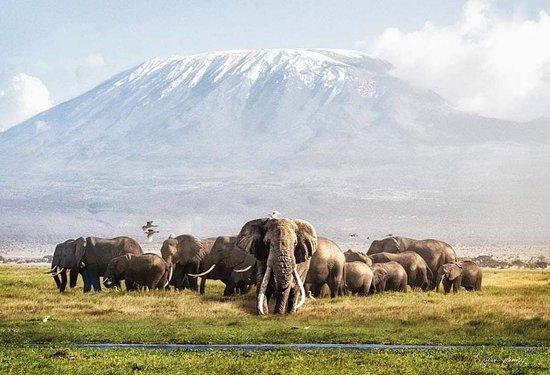 Национальный парк Масаи-Мара, Кения: African elephants