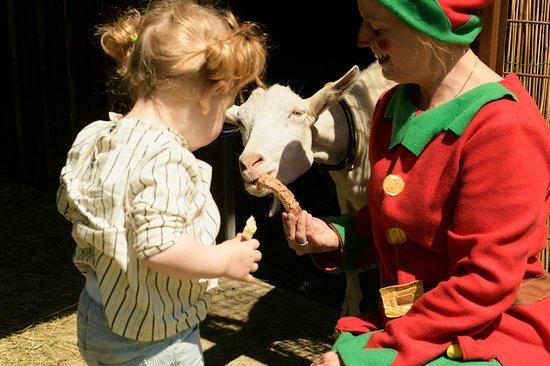 I bimbi si divertiranno un mondo a interagire con gli animali della nostra piccola fattoria