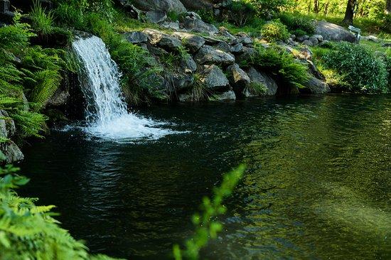 La fonte del laghetto. Si può anche pescare!