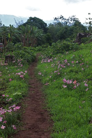 Kalaw to Inle Trekking tour 3 Days 2 Nights (off the beaten track): Flowers along much of the path