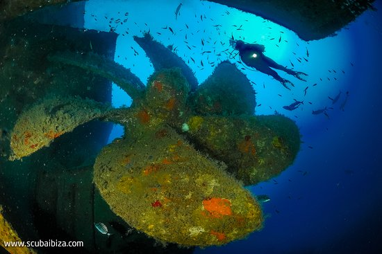 Scuba Ibiza Diving Center: Don Pedro