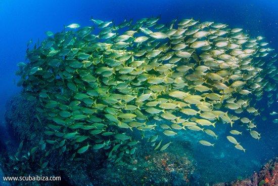 Scuba Ibiza Diving Center: Salpas