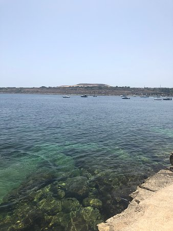 Maltese Delight