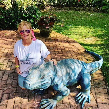Blue Iguana Recovery Programme for endangered Blue Iguanas