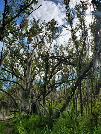 Everglades National Park, FL: Beginning of trail from parking area