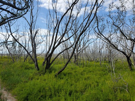 Trial opening up into grasslands