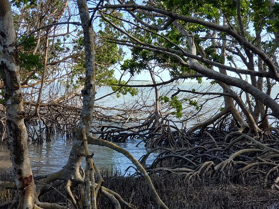 Everglades National Park, FL: Bay loop area with mangroves