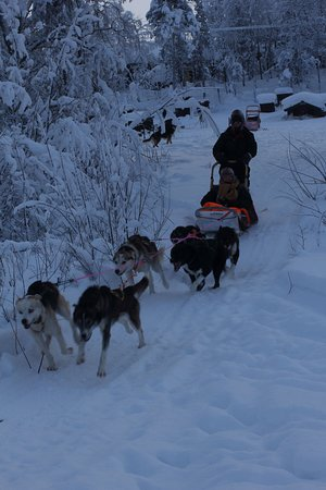 This is some other people dog sledding, the morning after my dog sledding.