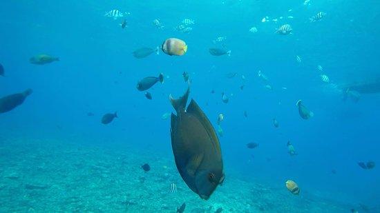 Ceningan Snorkeling Trip: crystal bay