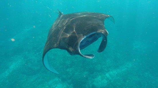 Ceningan Snorkeling Trip: manta bay!