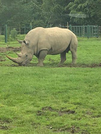 Blair Drummond Safari and Adventure Park: The resident Rhino