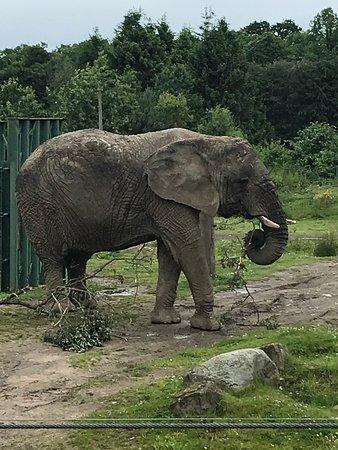 Blair Drummond Safari and Adventure Park: A very sweet Elephant