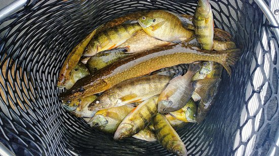 Tom Leahy's Guide Service: Chippewa Flowage 2019