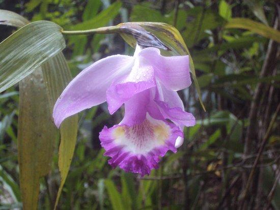 Ixiamas, โบลิเวีย: www.madidiadventures.com